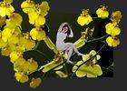 Die kleine Fee der Orchidee
