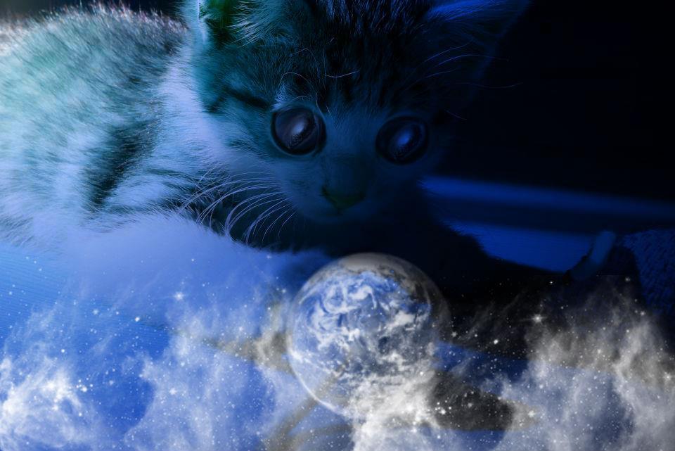 Die kleine große Welt eine kleinen Katze....