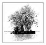 Die kleine Insel im Bodensee