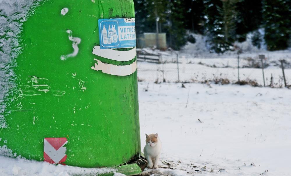 die kleine Katze und die grüne Tonne