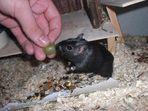 Die kleine Maus und die große Hand...