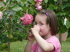 Die kleine Miss Lissy und die Rosen