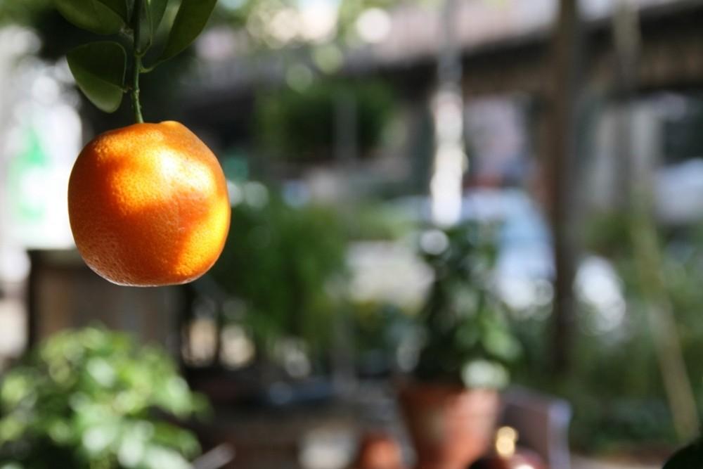 die kleine orange...