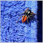 Die kleine Spinne auf dem Badetuch