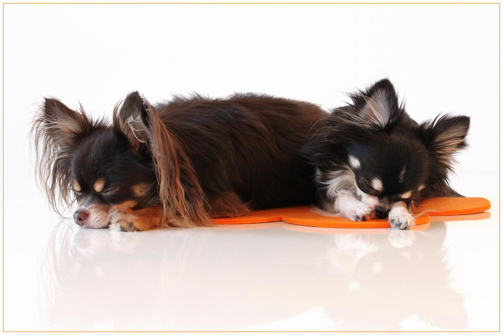 Die Kleinen am Schlafen
