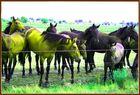"""""""Die kleinen gelben Pferdchen"""""""