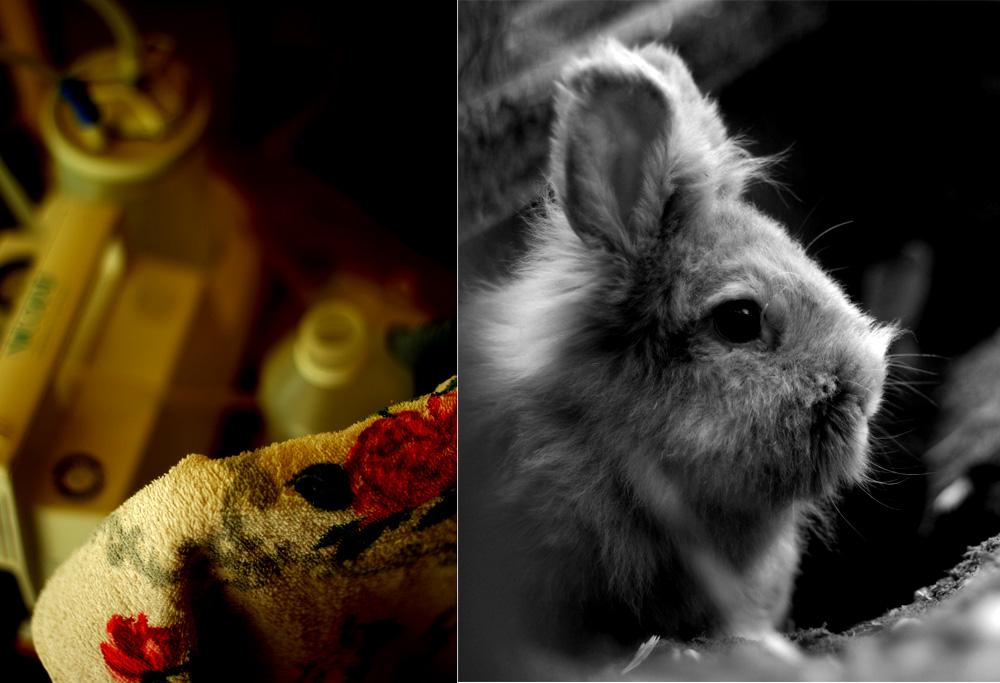 Die Kleintierfotografie wird allgemein unterschätzt