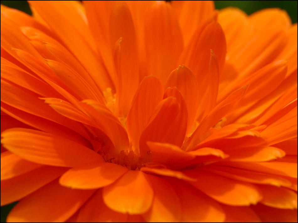 Die Knospe zur Blüte...