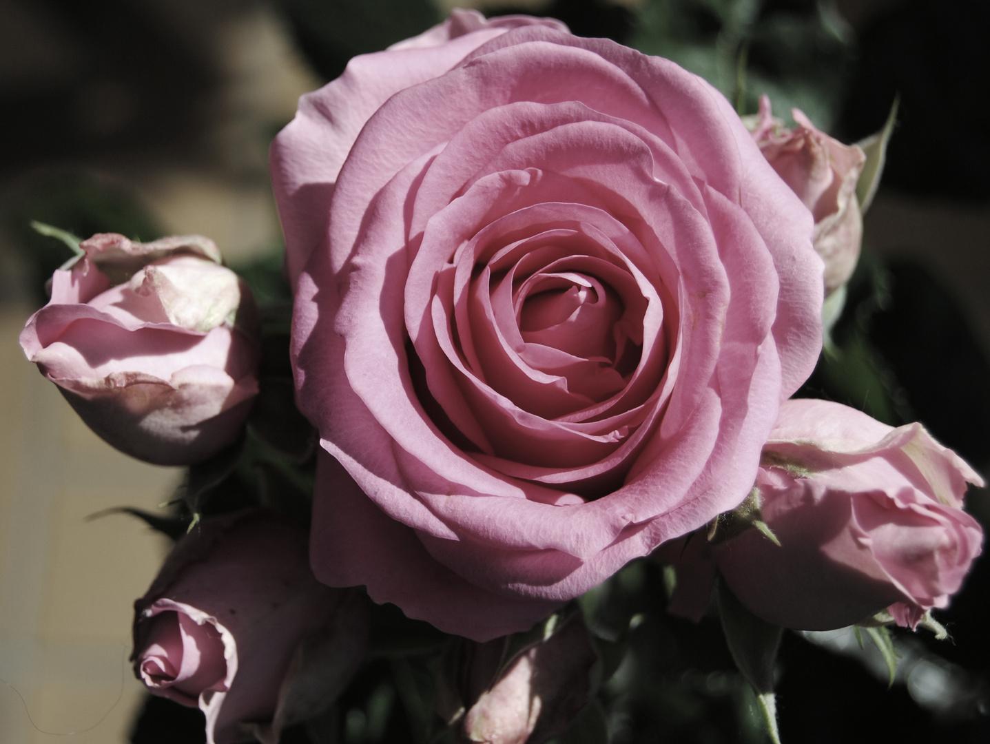 Die Königin der Blüten.......