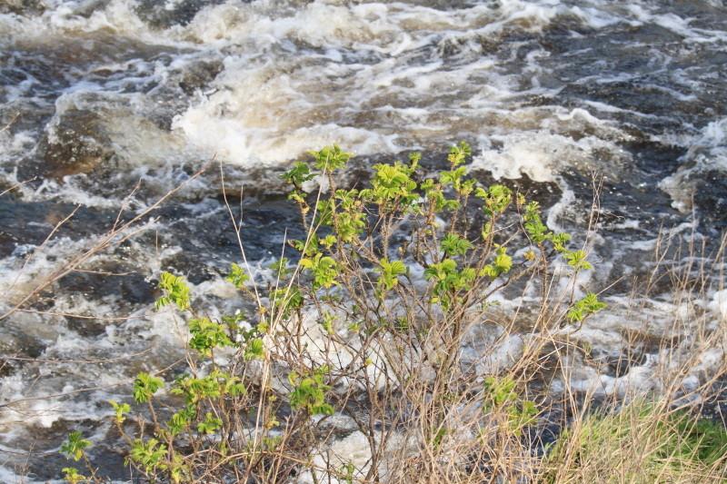 Die Kraft des Wassers.