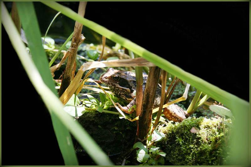 Die Kröte aus dem Hinterhof