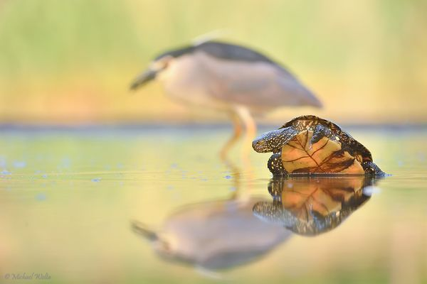Die Kröte und der Reiher