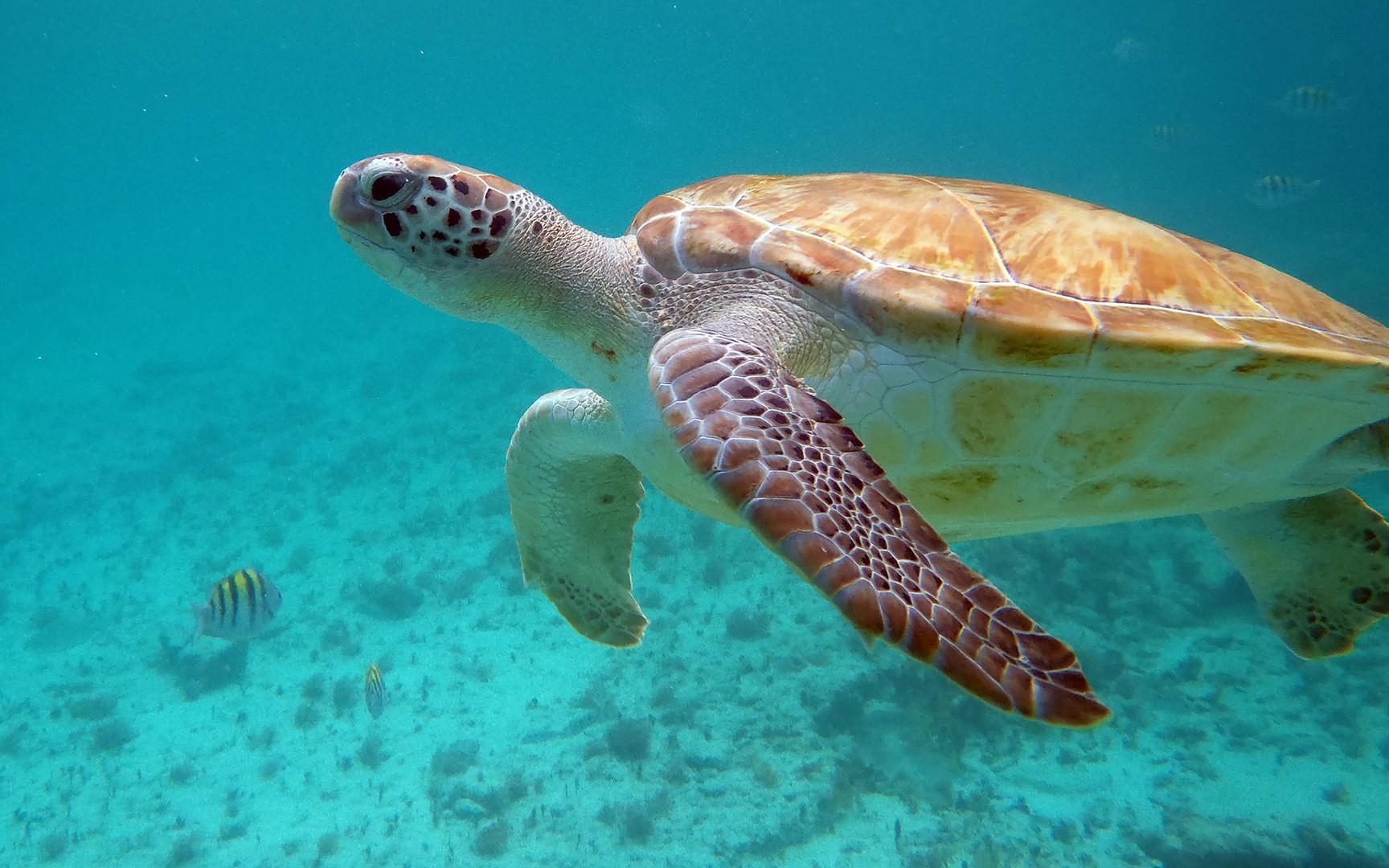 Die Kröte under water