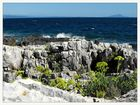 die Küsten Istriens...
