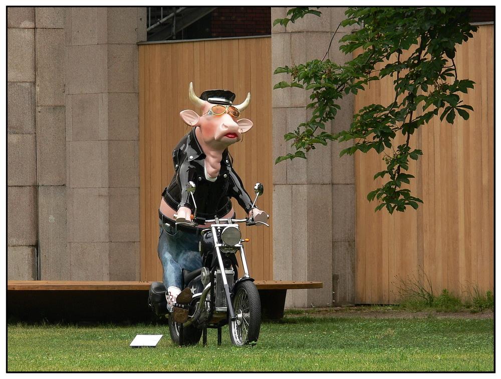Die Kuh die biked!