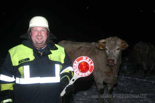 Die Kuh macht Muh viele Kühe machen Mühe