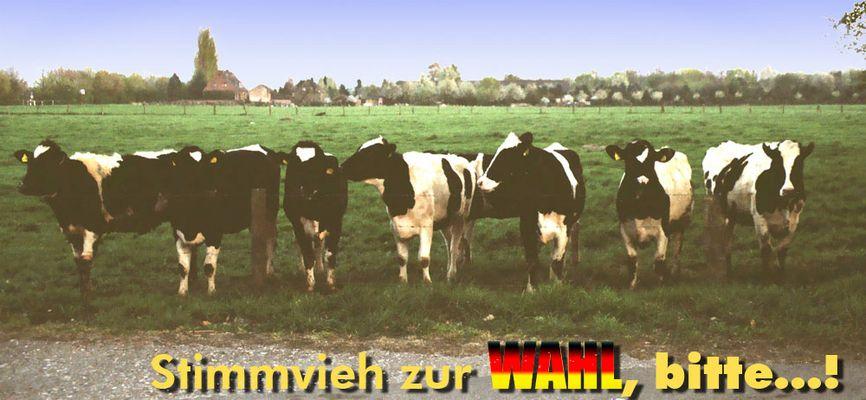 Die Kuh-WAHL
