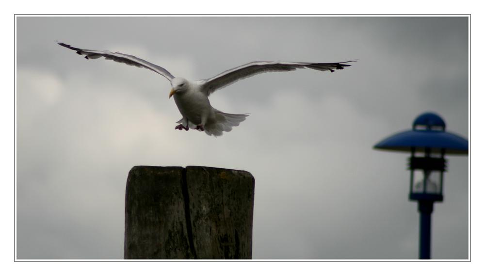Die Landung...