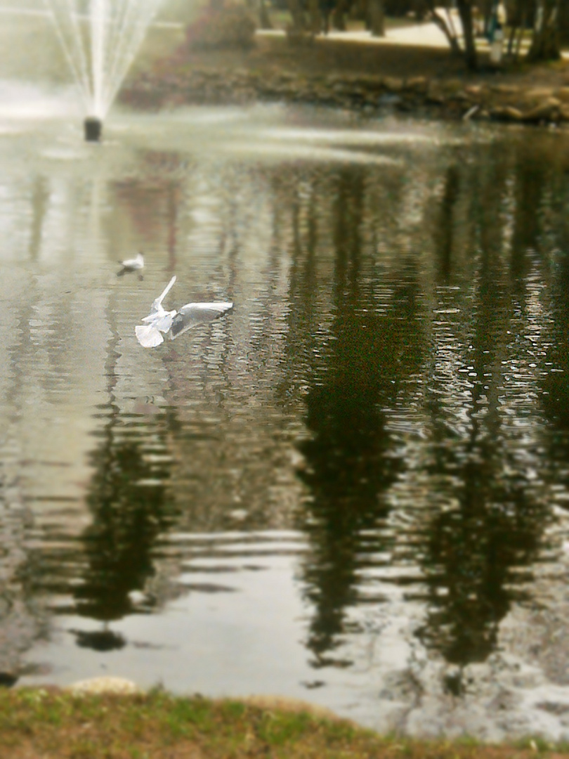 Die Landung