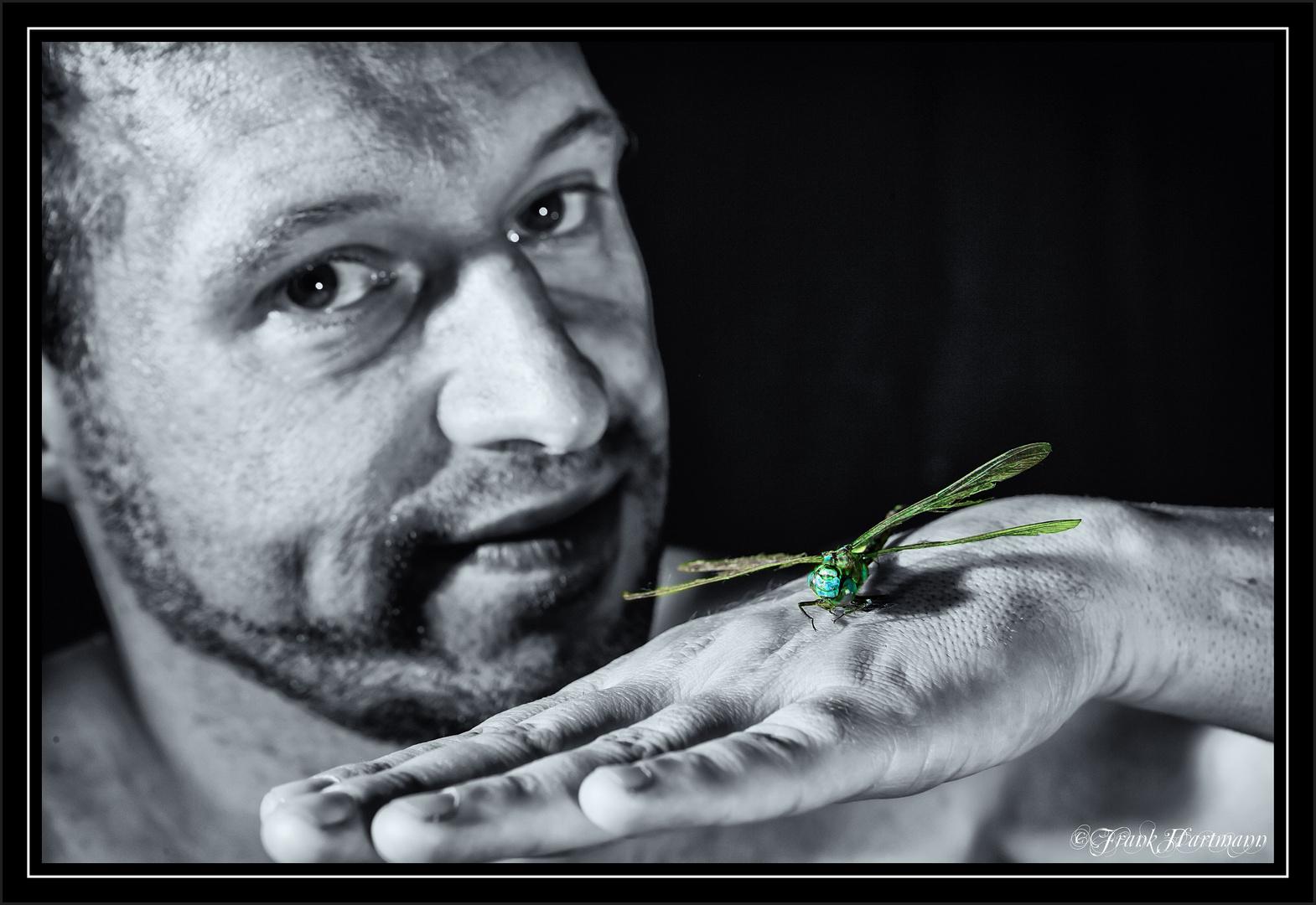 Die Landung der Libelle