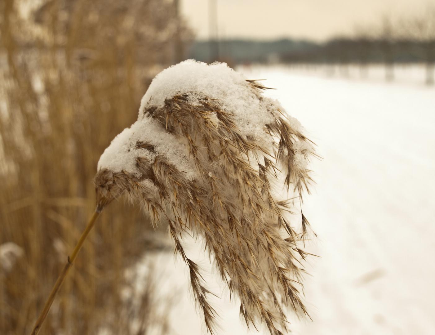 Die Last des Schnees....