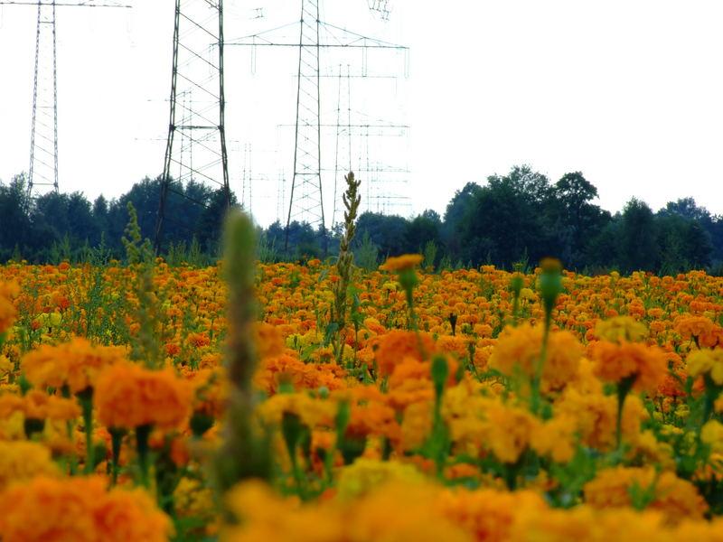 Die Lausitzer Landschaft***trotz Masten schön.