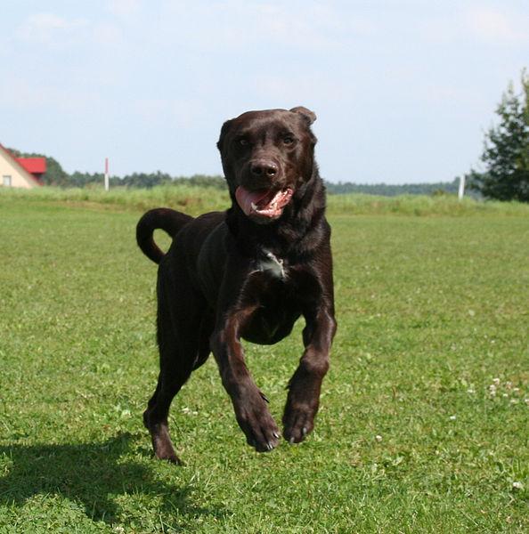...die lebensfreude eines Hundes...