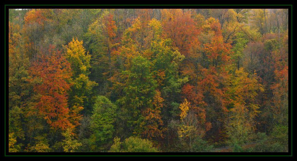 Die letzen Farben des Herbstes