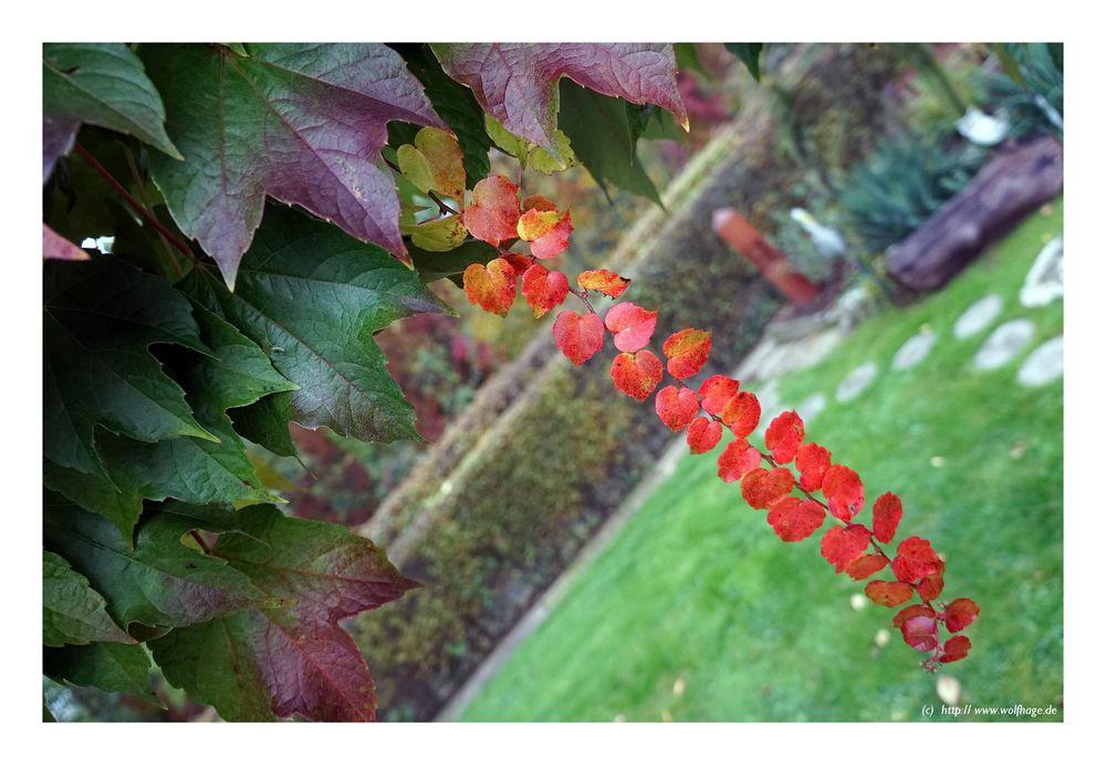 Die letzen Herbstfarben