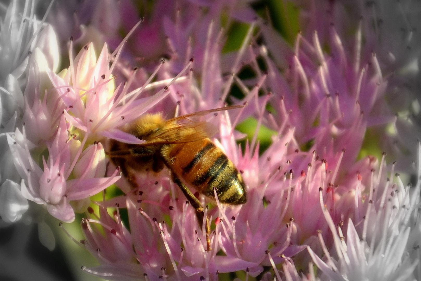 Die letzte Biene