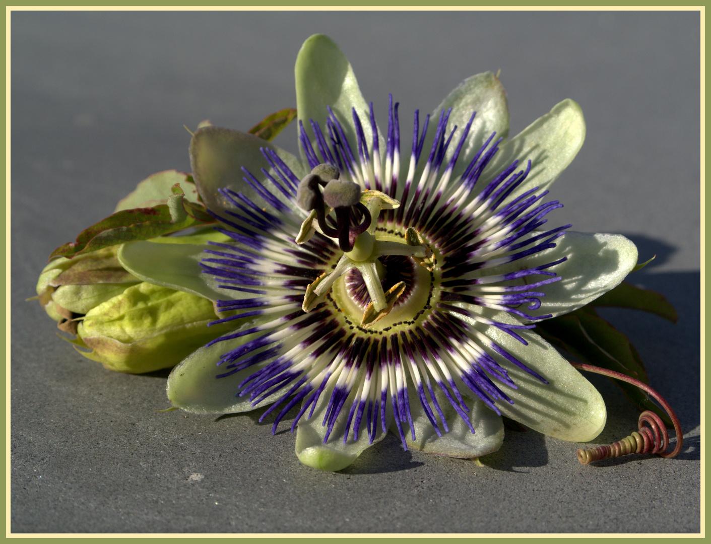Die letzte Blüte...