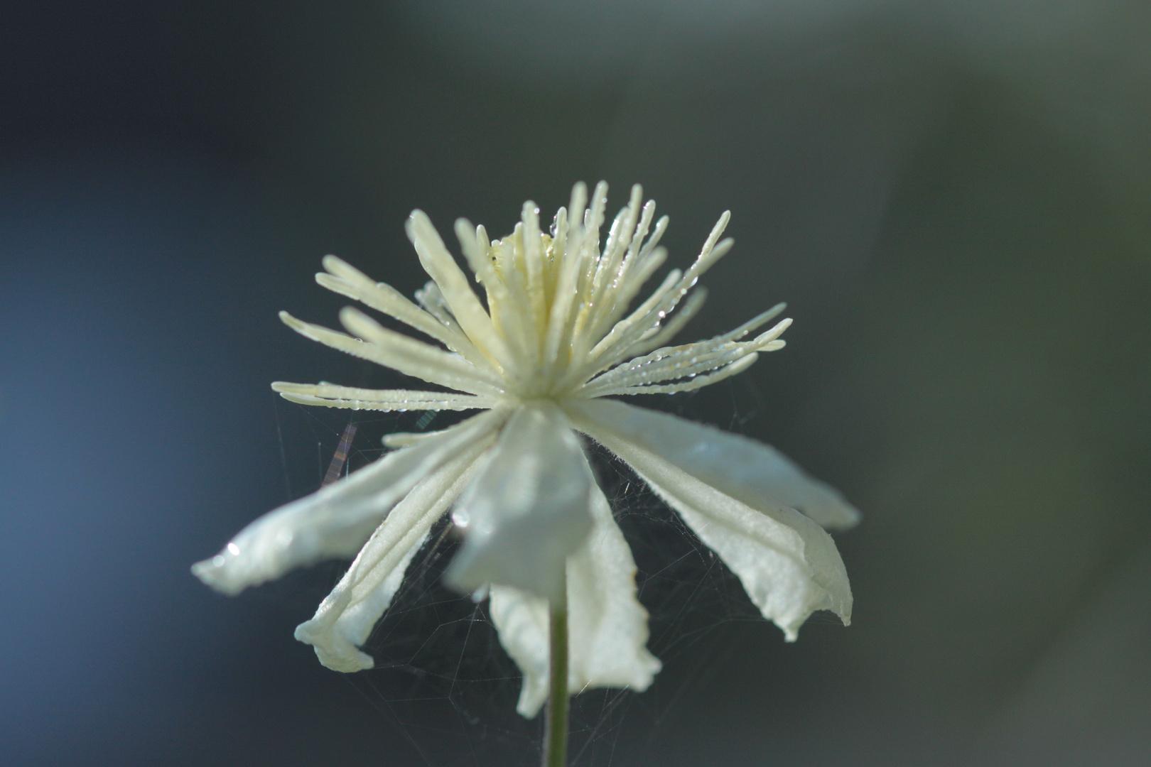 Die letzte Blüte