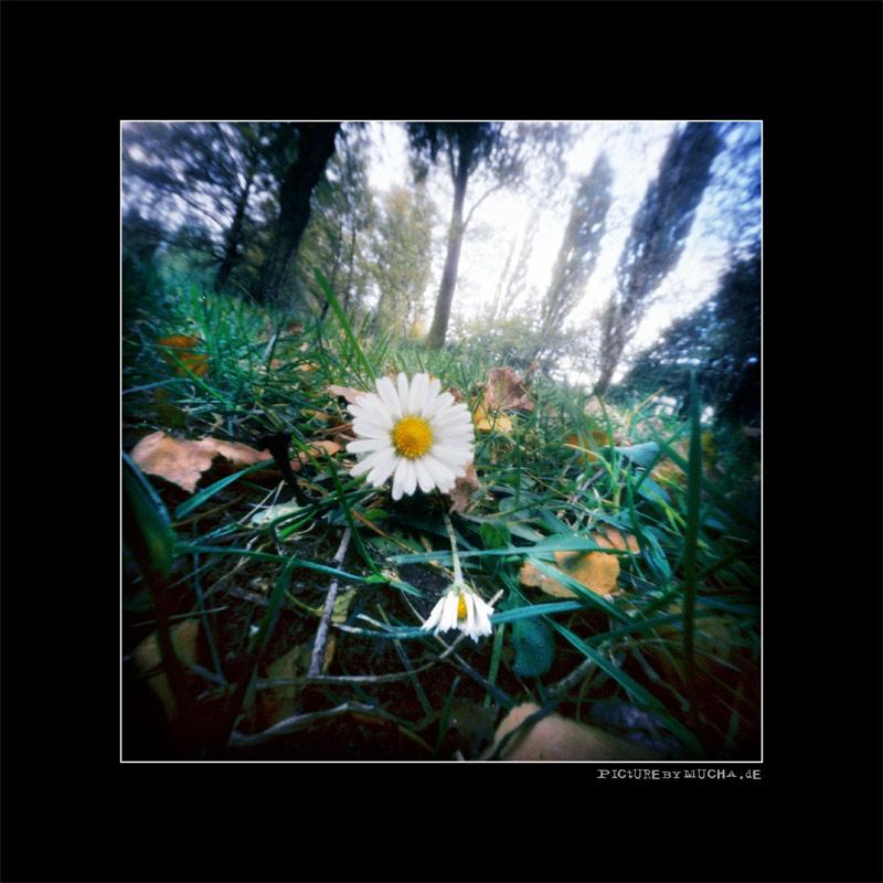 Die letzte Blume
