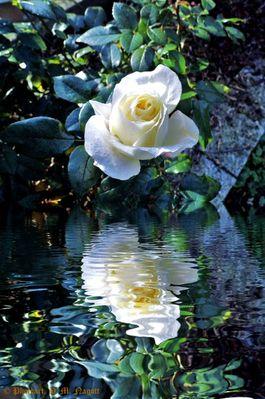 Die letzte Rose...in diesem Jahr 2