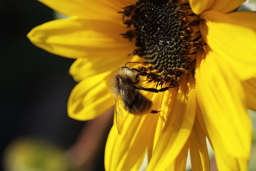 Die letzten Bienen 2
