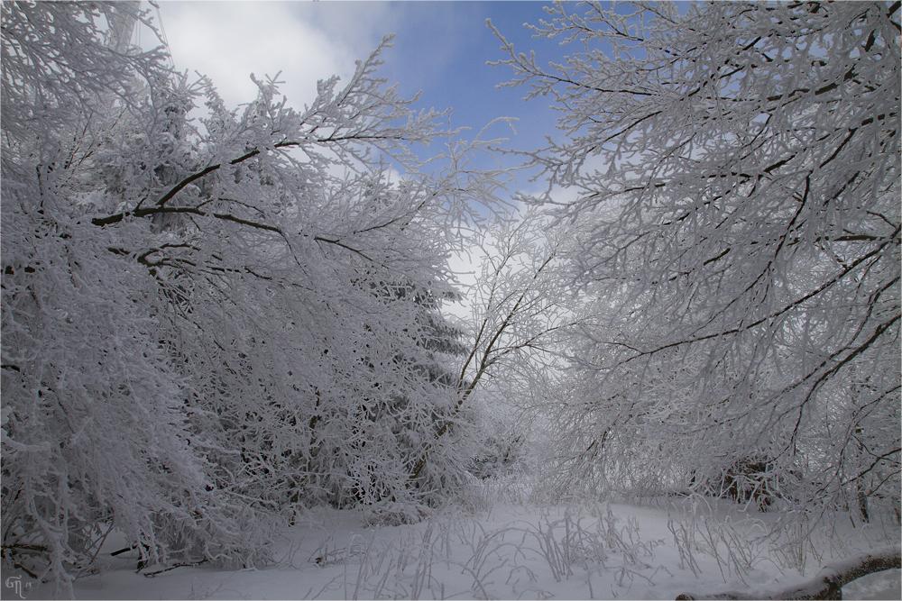Die letzten Bilder des Winters ( 4 )