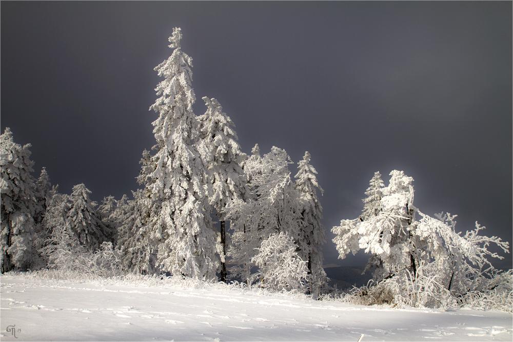 Die letzten Bilder des Winters ( 5 )