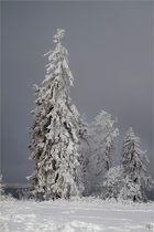 Die letzten Bilder des Winters ( 6 )