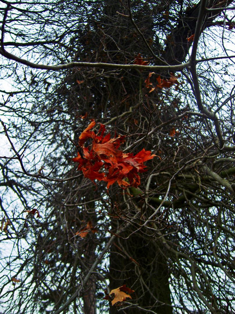 Die letzten Blätter.