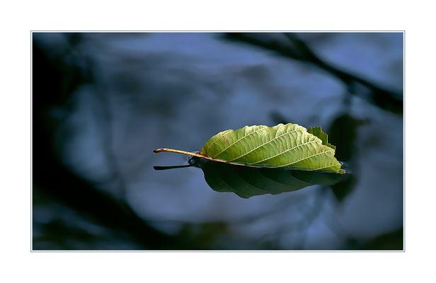 die letzten Blätter fallen...