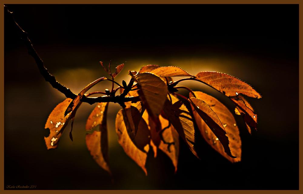 .. die letzten Blätter im letzten Abendlicht ...