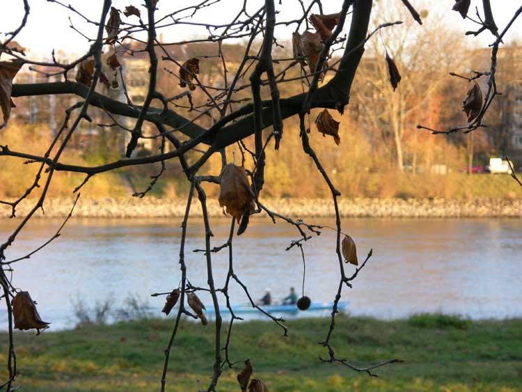 Die letzten Blätter..(ausserhalb und innerhalb des Wassers)