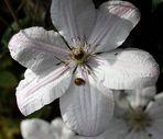-Die letzten Blüten....