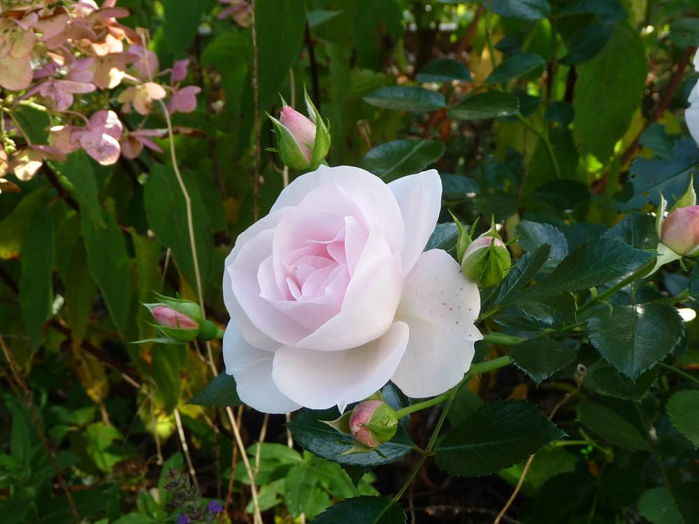 ... die letzten Blüten des Jahres