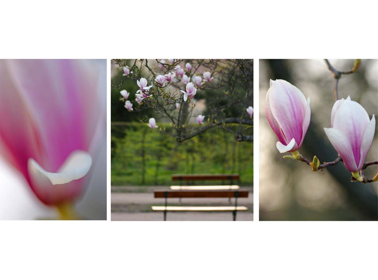 ...die letzten Blüten genießen