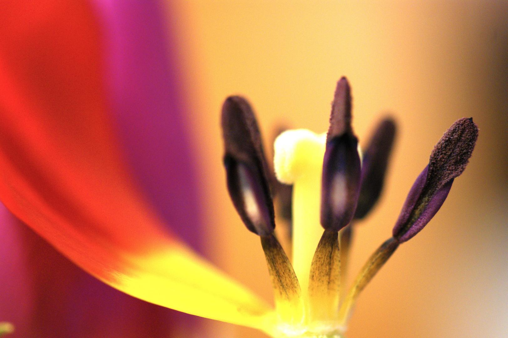 die letzten Blütten