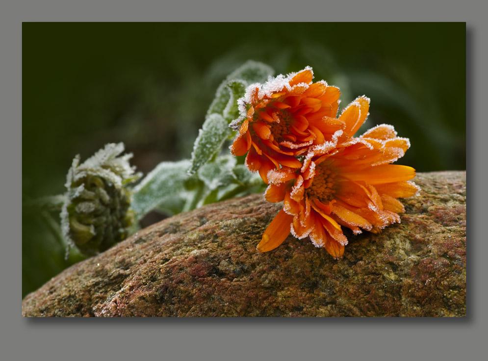 die letzten Blumen