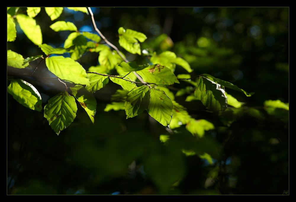 Die letzten frischen Blätter...