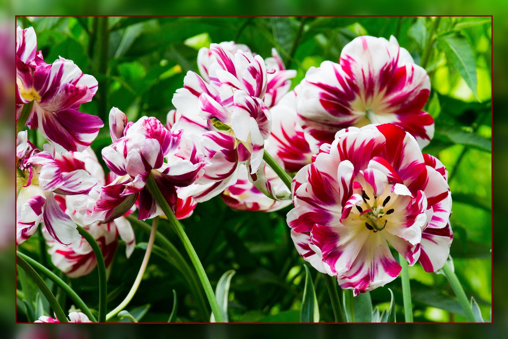 Die letzten Frühlingsblüten 08