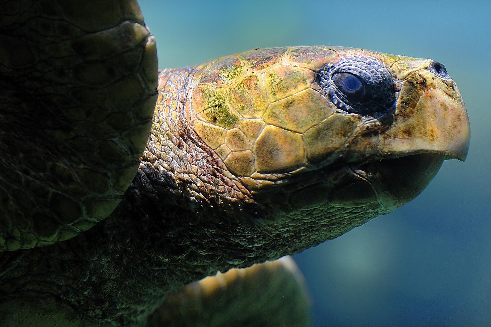 """Die letzten Ihrer Art """"Wasserschildkröte"""""""